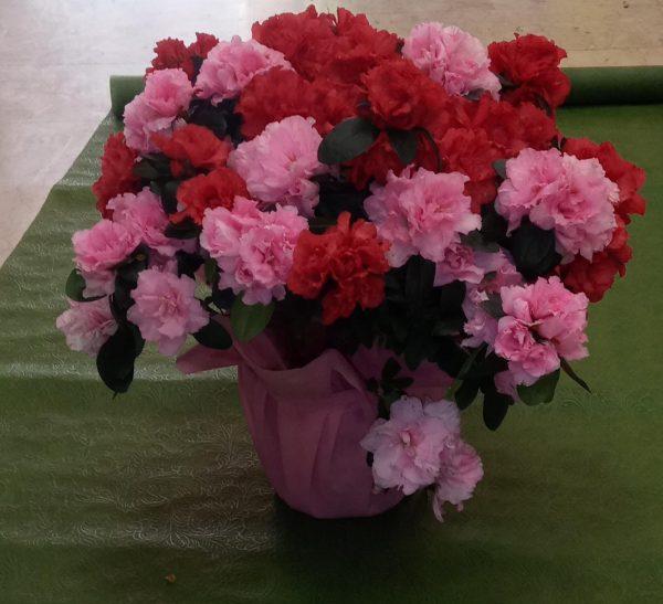 vendita fiori freschi online