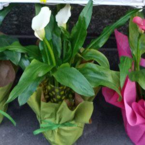 vendita piante online torino